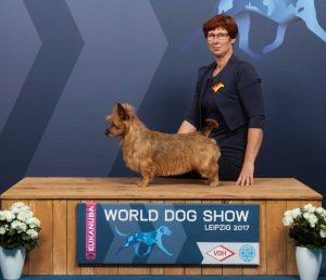 Australian Terrier Nyx vom Schloß Mordor_WORLD_DOG_SHOW_2017_Kynoweb_Kynoweb-Ernst-von-Scheven_20171111_16_11_29o