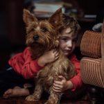 Australian Terrier Odin vom Schloß Mordor 2