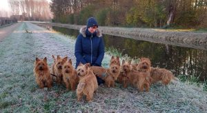 Australian Terrier vom Schloß Mordor winter 2021